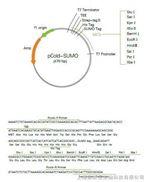 pCold-SUMO蛋白表达试剂盒