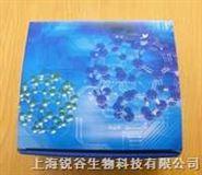 猫p27核心抗原(P27)ELISA 试剂盒