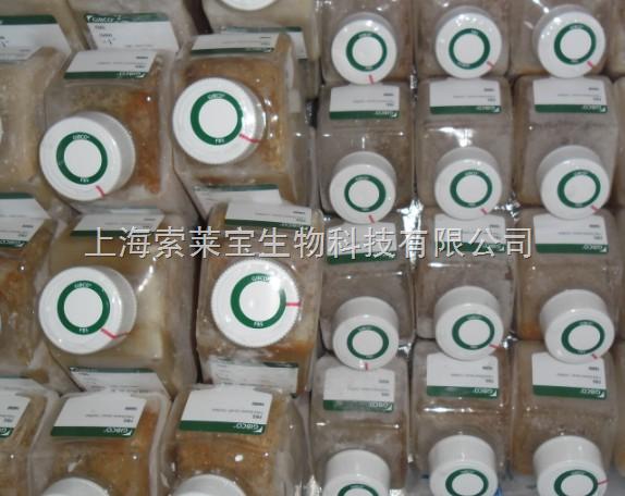 澳洲胎牛血清 【GIBCO原装正品】 上海索莱宝生物科技