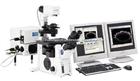 olympus 奥林巴斯IX81倒置荧光显微镜