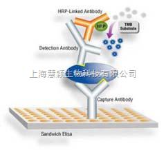 猪口蹄疫病毒非结构蛋白3ABC IgG抗体ELISA试剂盒