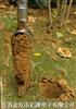 ET心型土壤采样钻