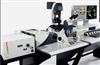 Leica TCS SP5 X白光激光共聚焦显微镜
