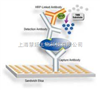 H5亚型禽流感抗原(AIV-Ag)金标检测卡