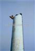 水泥烟囱防腐作业